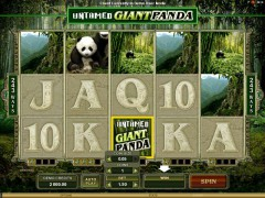 Untamed Giant Panda - Quickfire